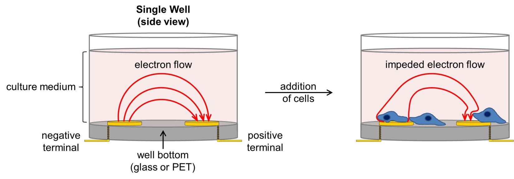 Figura 1 - Representação do dispositivo de impedância celular