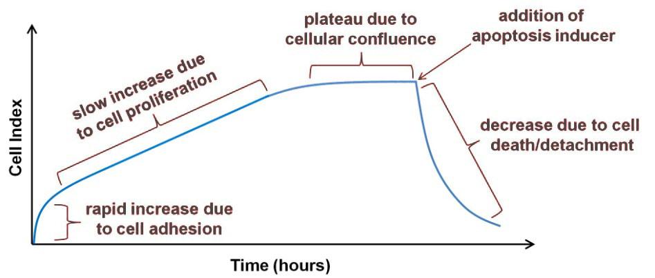 Figura 2 – Curva típica de impedância em tempo real para um ensaio de apoptose